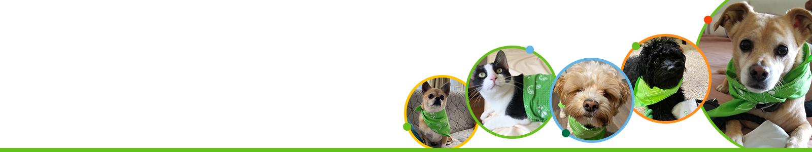 Pet Direct Mailer Banner