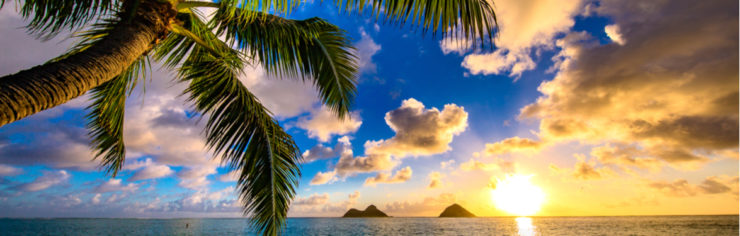 Cohesity Cares: Hawaii Company Trip and Holiday Giving